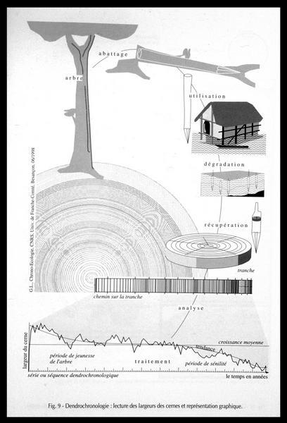 Vue du dessin de la lecture des cernes et de leur représentation graphique (fouille M. L'Hour/Drassm, E. Veyrat/Drassm).