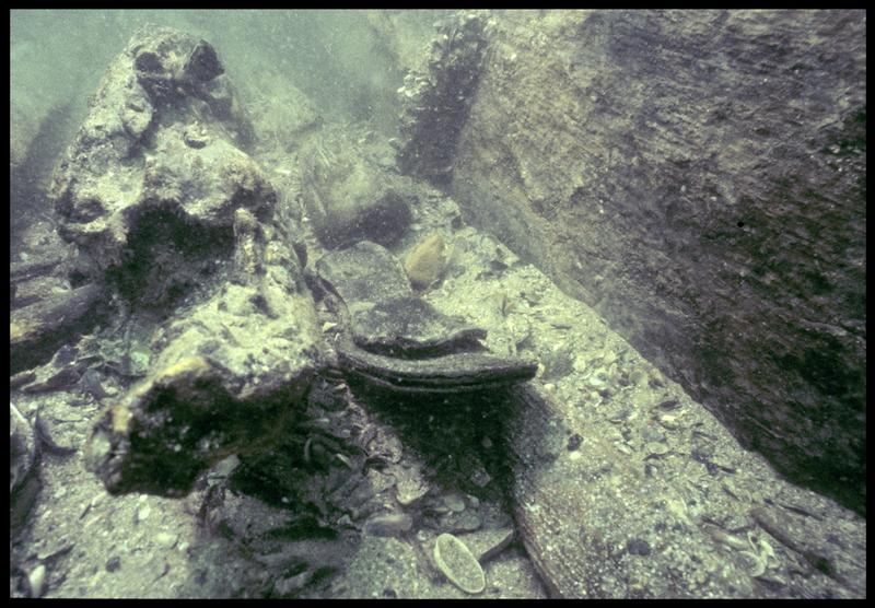 Vue sous-marine d'une chaussure de cuir in situ (fouille M. L'Hour/Drassm, E. Veyrat/Drassm).