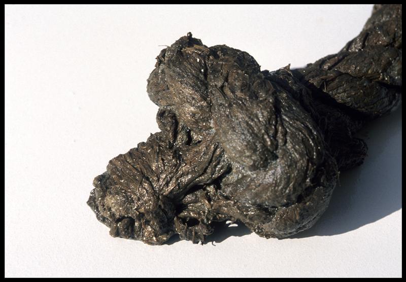 Vue d'un fragment de cordage (fouille M. L'Hour/Drassm, E. Veyrat/Drassm).
