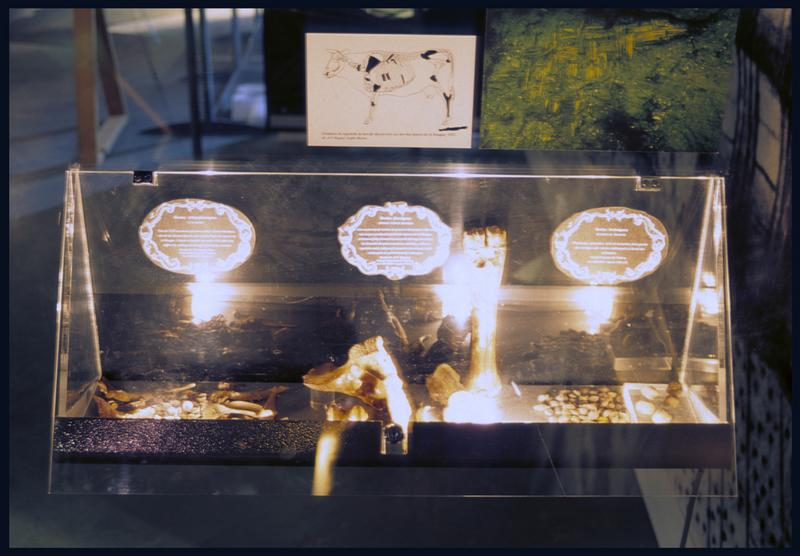 Vue de divers ossements dans une vitrine d'exposition.