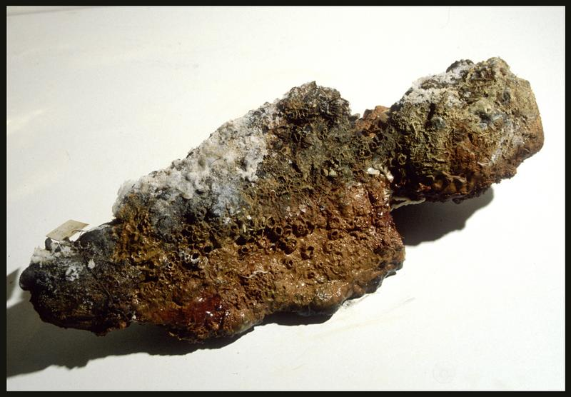 Vue d'un élément métallique (fouille M. L'Hour/Drassm, E. Veyrat/Drassm).