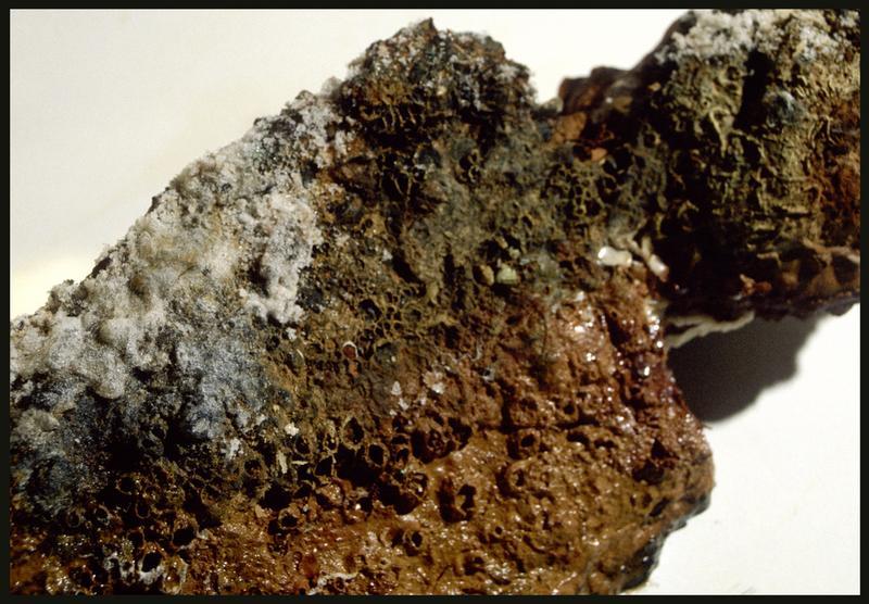 Vue de détail d'un élément métallique (fouille M. L'Hour/Drassm, E. Veyrat/Drassm).