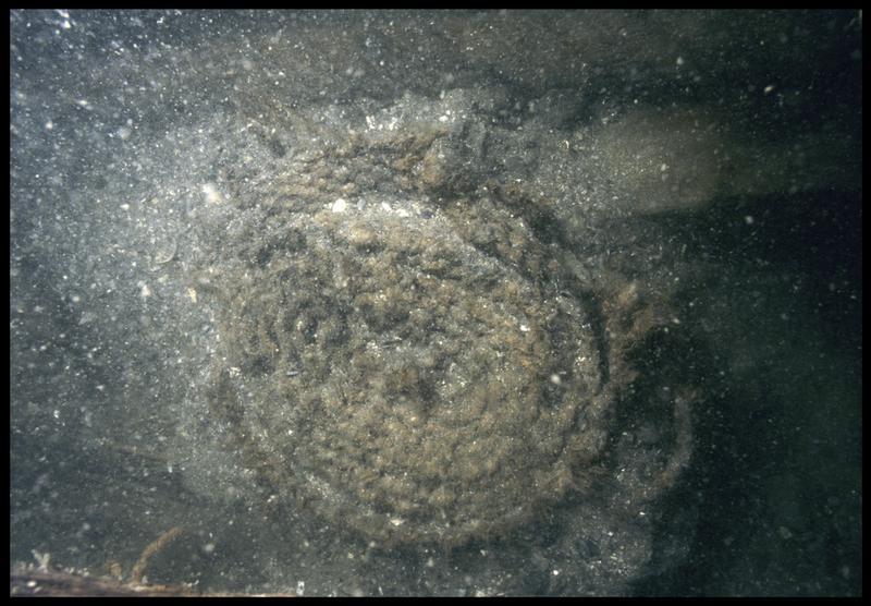 Vue sous-marine d'un cordage lové in situ (fouille M. L'Hour/Drassm, E. Veyrat/Drassm).