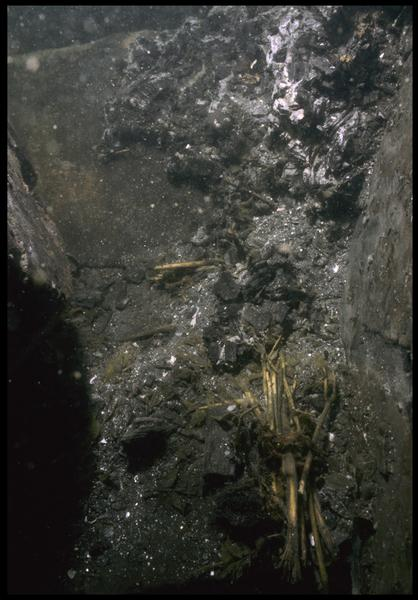 Vue sous-marine d'un cordage et de paille in situ (fouille M. L'Hour/Drassm, E. Veyrat/Drassm).