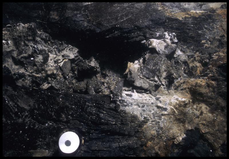 Vue sous-marine d'un élément végétal in situ (fouille M. L'Hour/Drassm, E. Veyrat/Drassm).