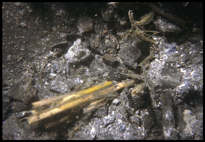 Vue sous-marine de détail de fragments de végétaux in situ (fouille M. L'Hour/Drassm, E. Veyrat/Drassm).