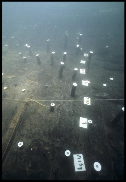 Vue sous-marine des gournables des membrures in situ (fouille M. L'Hour/Drassm, E. Veyrat/Drassm).
