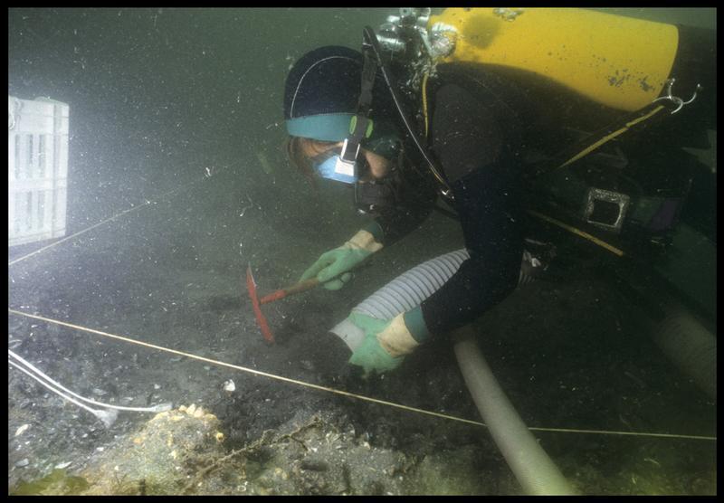 Vue sous-marine d'un plongeur dévasant à la suceuse à eau la concrétion métallique (fouille M. L'Hour/Drassm, E. Veyrat/Drassm).