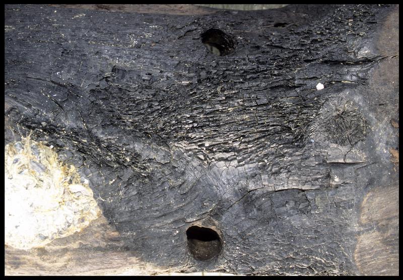 Vue de détail du chevillage d'une pièce de la membrure (fouille M. L'Hour/Drassm, E. Veyrat/Drassm).