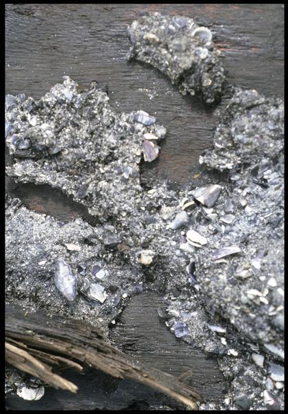Vue de détail du mantelet de sabord (fouille M. L'Hour/Drassm, E. Veyrat/Drassm).
