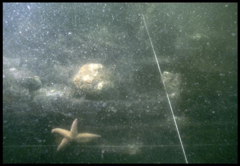 Vue sous-marine de détail de la carène dans le carroyage (fouille M. L'Hour/Drassm, E. Veyrat/Drassm).
