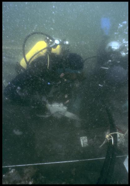 Vue sous-marine d'un plongeur utilisant la scie hydraulique pour tronçonner la carène (fouille M. L'Hour/Drassm, E. Veyrat/Drassm).