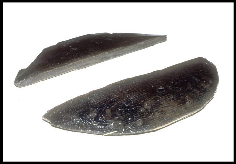 Vue de deux fragments de fond de tonneau de bois (fouille M. L'Hour/Drassm, E. Veyrat/Drassm).