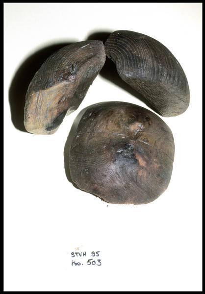 Vue de trois fragments de pomme de racage (fouille M. L'Hour/Drassm, E. Veyrat/Drassm).