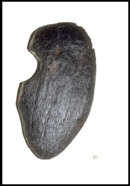 Vue d'un fragment de poulie de bois (fouille M. L'Hour/Drassm, E. Veyrat/Drassm).