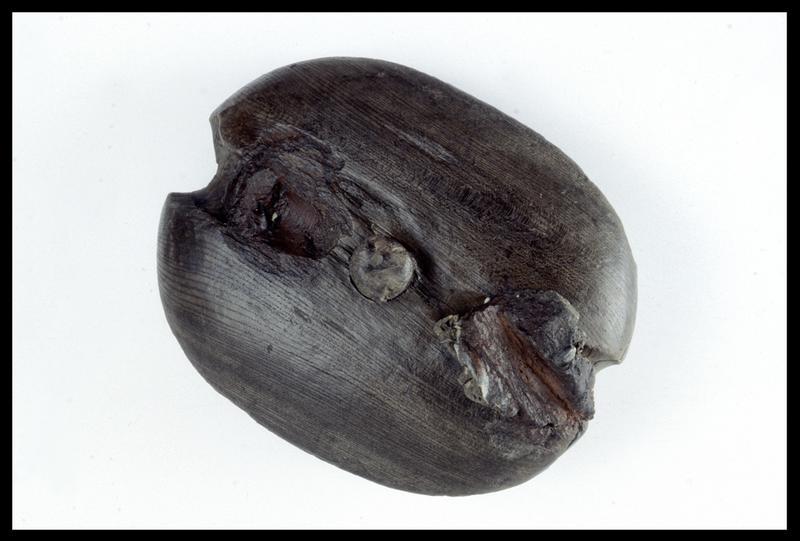 Vue d'une poulie de bois (fouille M. L'Hour/Drassm, E. Veyrat/Drassm).