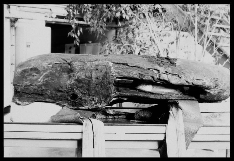 Vue d'une poulie de drisse de bois (fouille M. L'Hour/Drassm, E. Veyrat/Drassm).