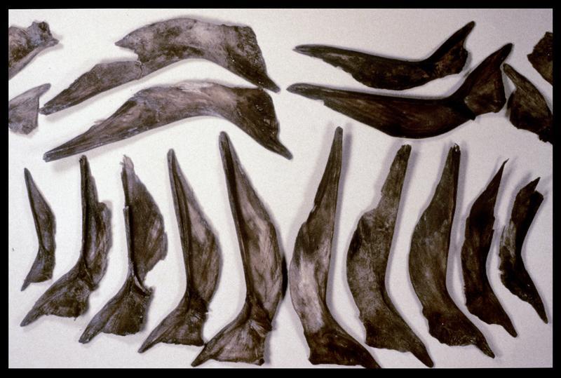 Vue de cartilage de poissons (fouille M. L'Hour/Drassm, E. Veyrat/Drassm).