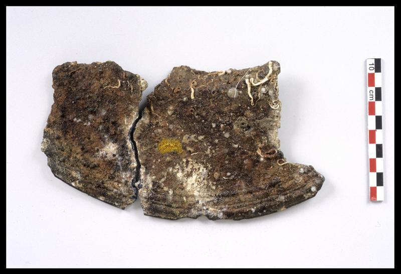 Vue d'un fragment de plat en étain (fouille M. L'Hour/Drassm).