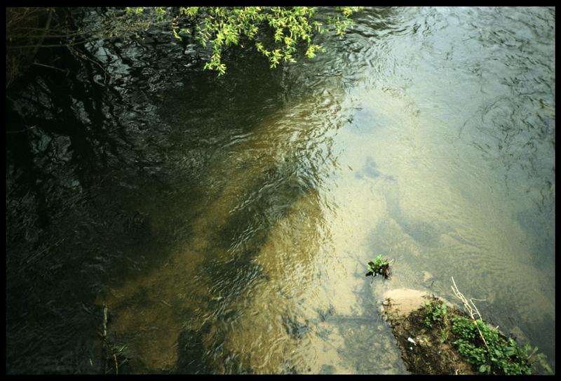 Vue de pieux depuis la surface (fouille P. Grandjean/Drassm).