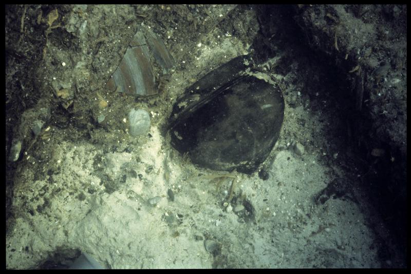 Vue sous-marine d'un fragment de céramique peinte et d'un vase in situ (fouille A. Marguet/Drassm).