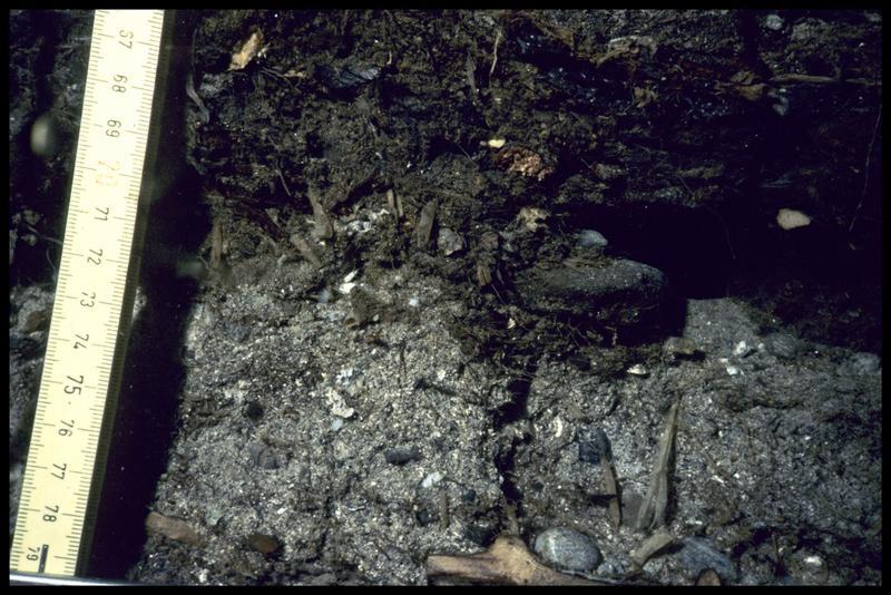 Vue sous-marine de la stratigraphie (fouille A. Marguet/Drassm).