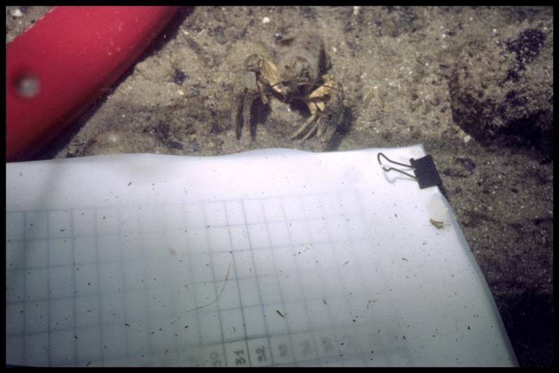 Vue sous-marine d'une écrevisse et de la tablette de relevé (fouille A. Marguet/Drassm).