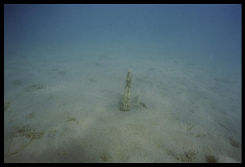 Vue sous-marine d'un pieu in situ (fouille A. Marguet/Drassm).