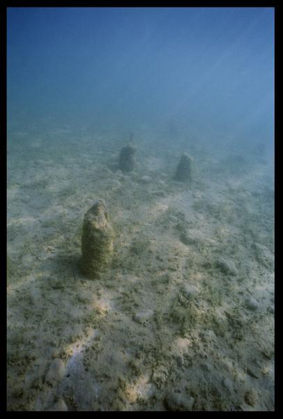 Vue sous-marine de pieux in situ (fouille A. Marguet/Drassm).