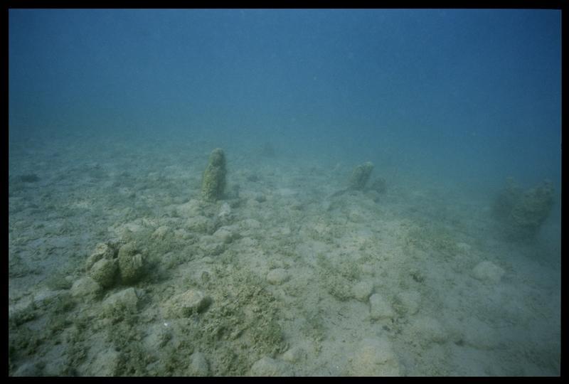 Vue sous-marine de pieux de bois in situ (fouille A. Marguet/Drassm).