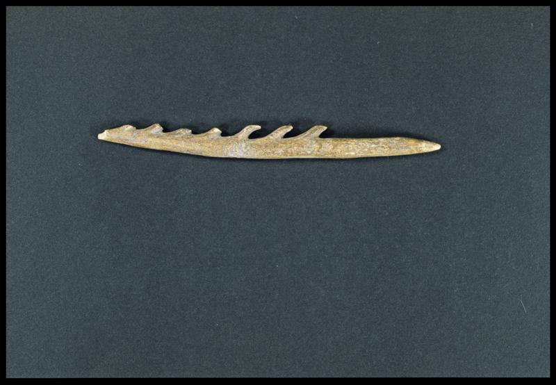 Vue du moulage d'un harpon en os (CNRAS).