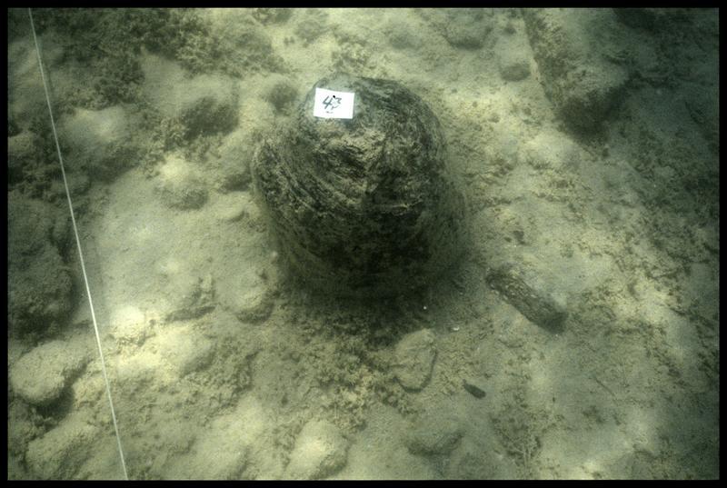 Vue sous-marine du pieu de bois 47 in situ (fouille A. Marguet/Drassm).