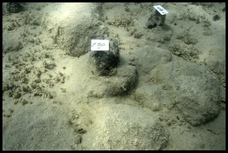 Vue sous-marine de deux pieux de bois (70 et 68) in situ (fouille A. Marguet/Drassm).