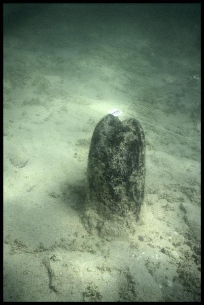 Vue sous-marine du pieu de bois 328 (fouille A. Marguet/Drassm).