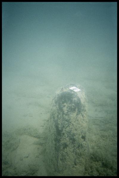 Vue sous-marine du pieu de bois 323 in situ (fouille A. Marguet/Drassm).