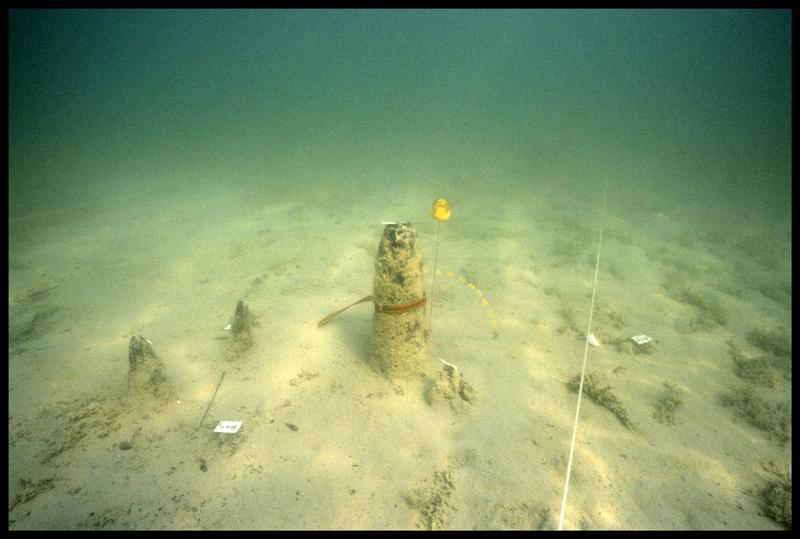 Vue sous-marine de cinq pieux de bois in situ et du pentomètre le le pieu 323 (fouille A. Marguet/Drassm).