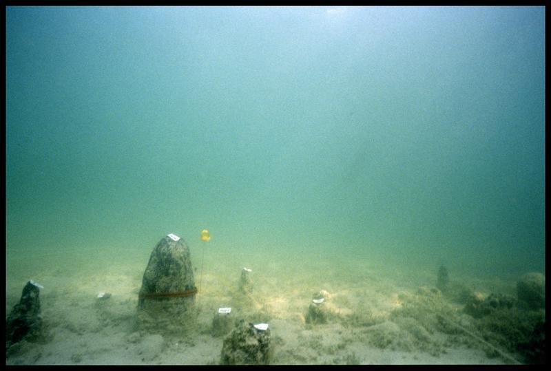 Vue sous-marine des pieux de bois in situ dont l'un avec le pentomètre (fouille A. Marguet/Drassm).