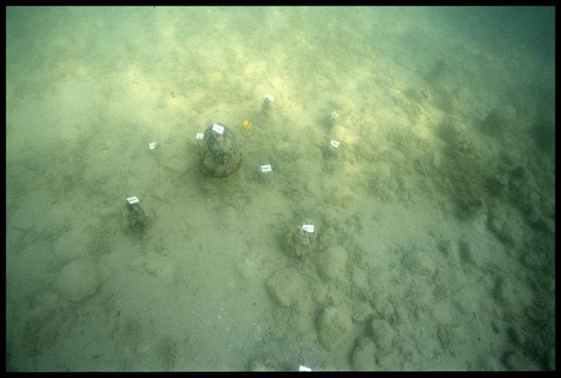 Vue sous-marine des pieux de bois in situ (fouille A. Marguet/Drassm).