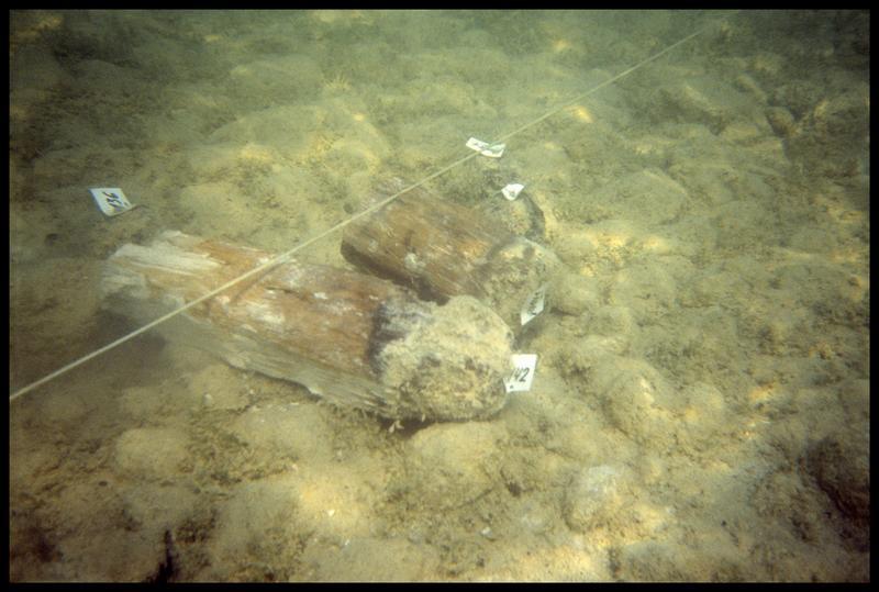 Vue sous-marine de deux pieux de bois coupés (fouille A. Marguet/Drassm).