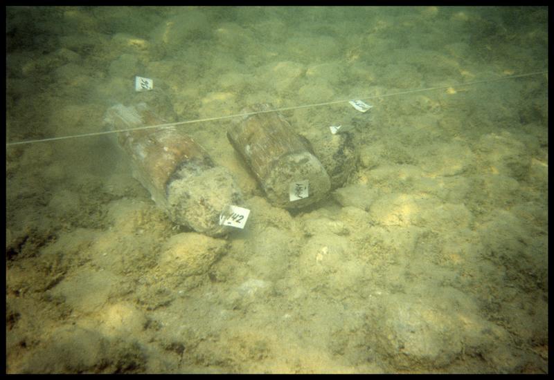Vue sous-marine de deux pieux de bois coupés (141, 142) (fouille A. Marguet/Drassm).