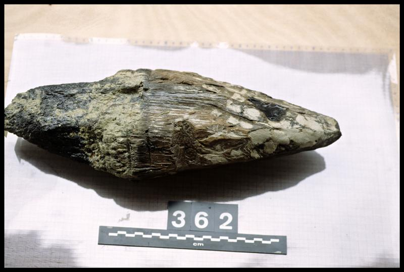 Vue du pieu de bois 362 (fouille A. Marguet/Drassm).