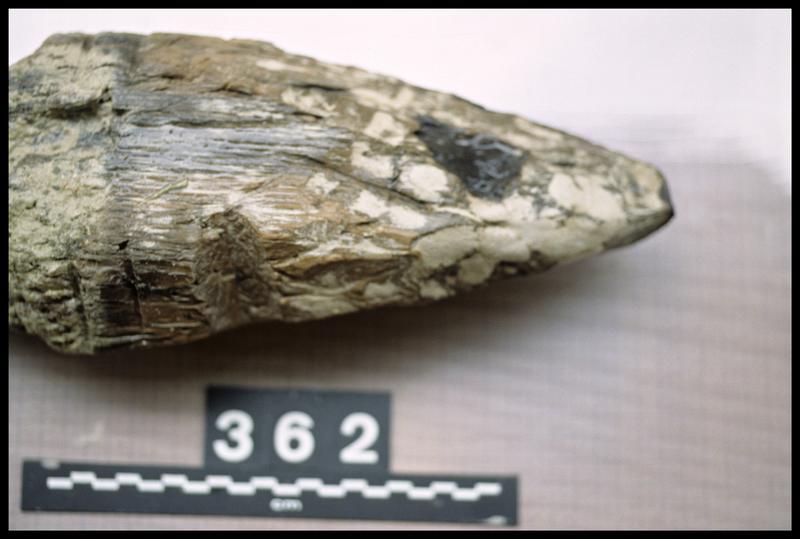 Vue de détail du pieu de bois 362 (fouille A. Marguet/Drassm).