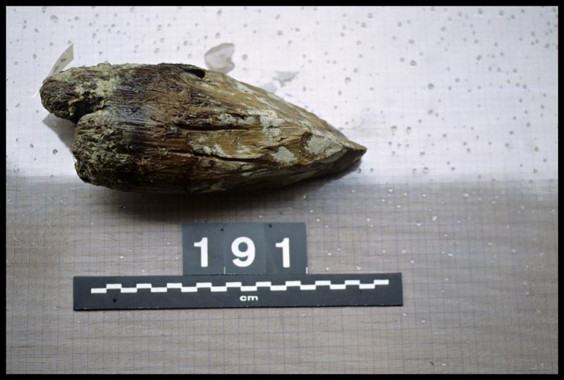 Vue du pieu de bois 191 (fouille A. Marguet/Drassm).