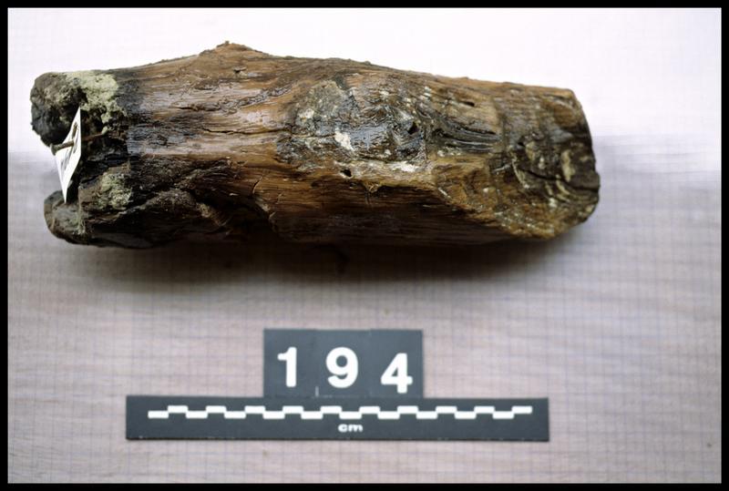 Vue du pieu de bois 194 (fouille A. Marguet/Drassm).