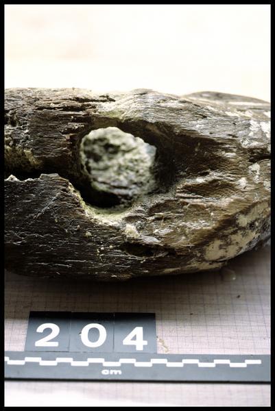 Vue de détail du pieu de bois 204 (fouille A. Marguet/Drassm).