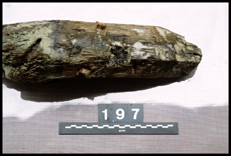 Vue du pieu de bois 197 (fouille A. Marguet/Drassm).