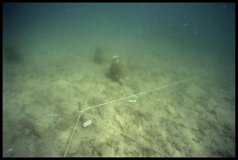 Vue sous-marine d'un pieu de bois dans un triangle de fouille (fouille A. Marguet/Drassm).