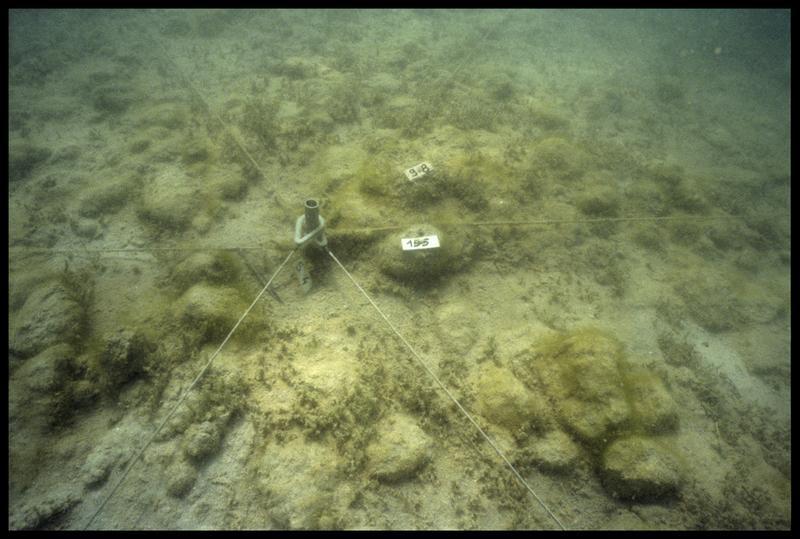 Vue sous-marine de deux pieux de bois (98 et 195) in situ (fouille A. Marguet/Drassm).