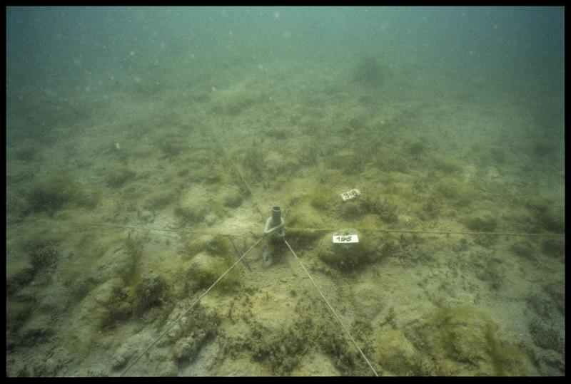 Vue sous-marine de deux pieux de bois in situ (fouille A. Marguet/Drassm).