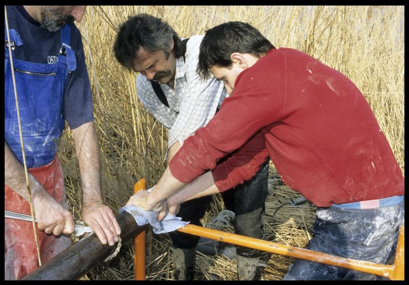 Vue de l'extraction d'une carotte du tube (fouille CNRAS).